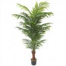 Areca Palme getopft Höhe 180cm, grün